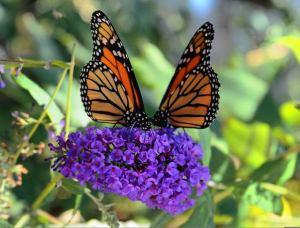 monarca-slider