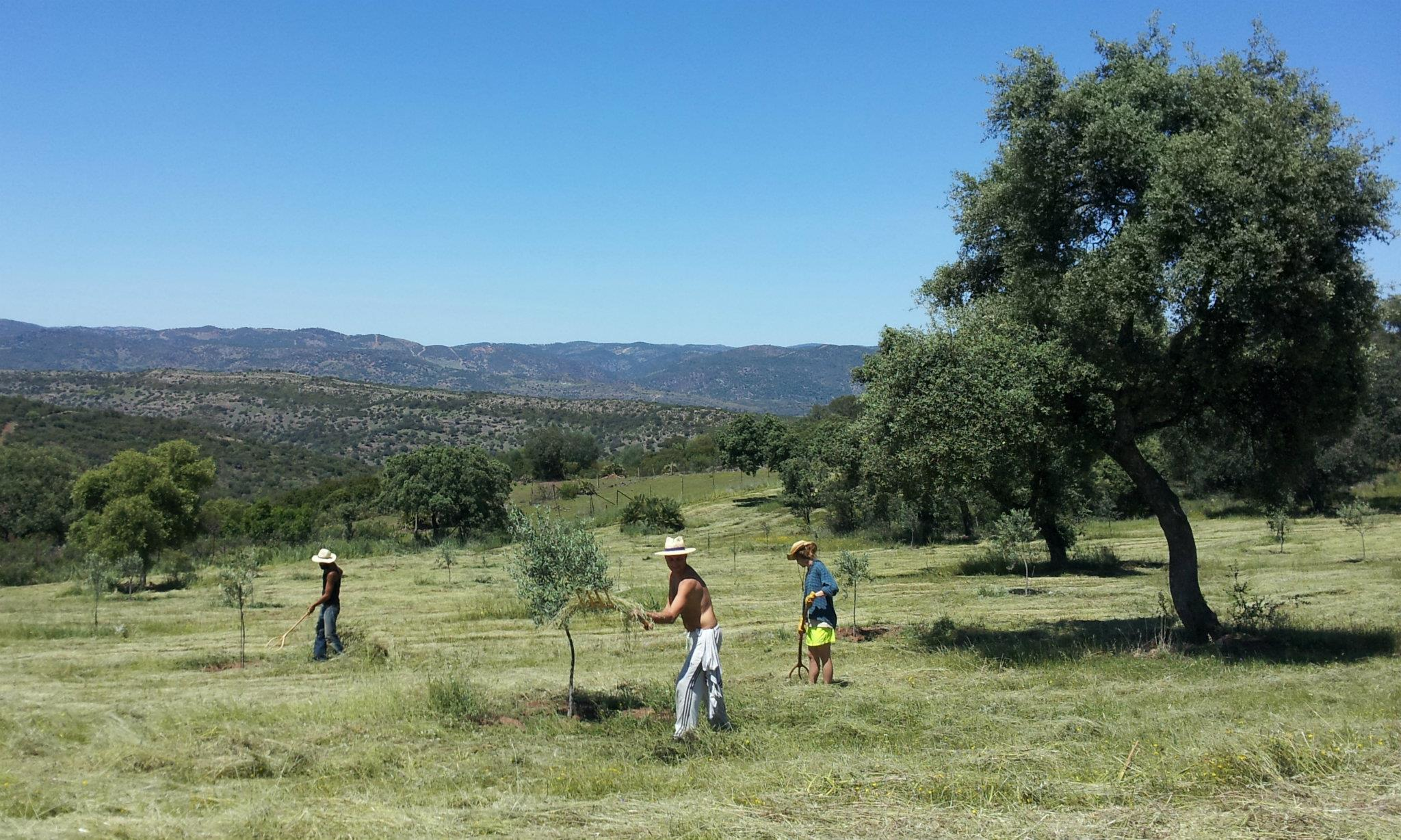 Facendo-wwoofing-in-Andalusia